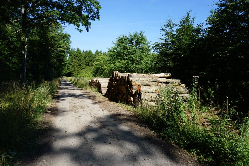 Skovbrug